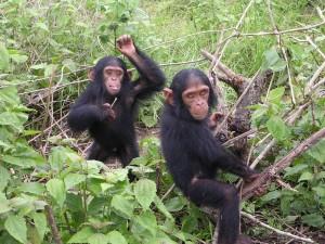 Маймуни край Тунджа