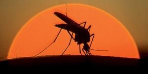комар-660x330